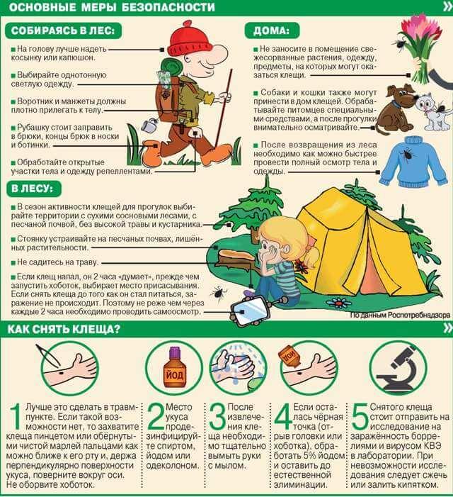 Как избежать укуса клеща